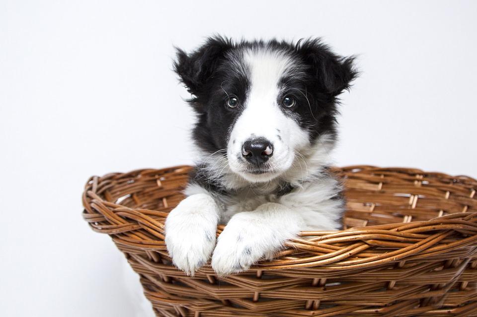 Cómo prepararle la maleta al perro para las vacaciones