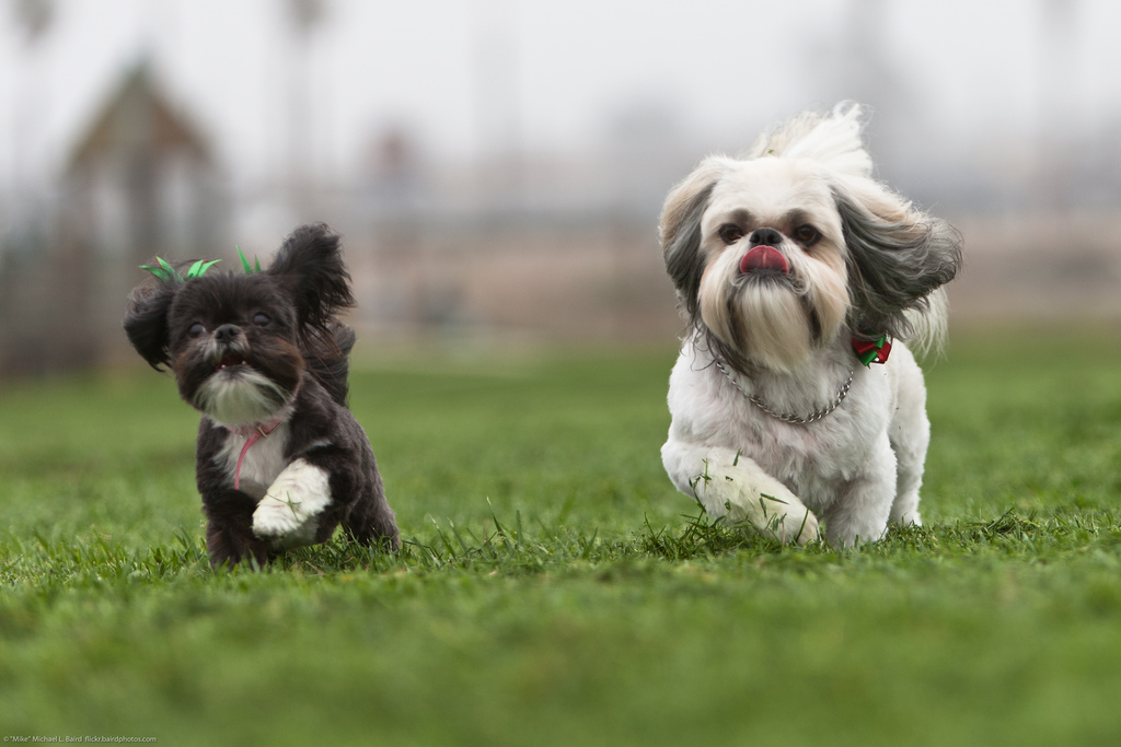 Dubái: la primera residencia de lujo para perros