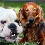 En Ibiza los perros podrán visitar a sus dueños en el hospital