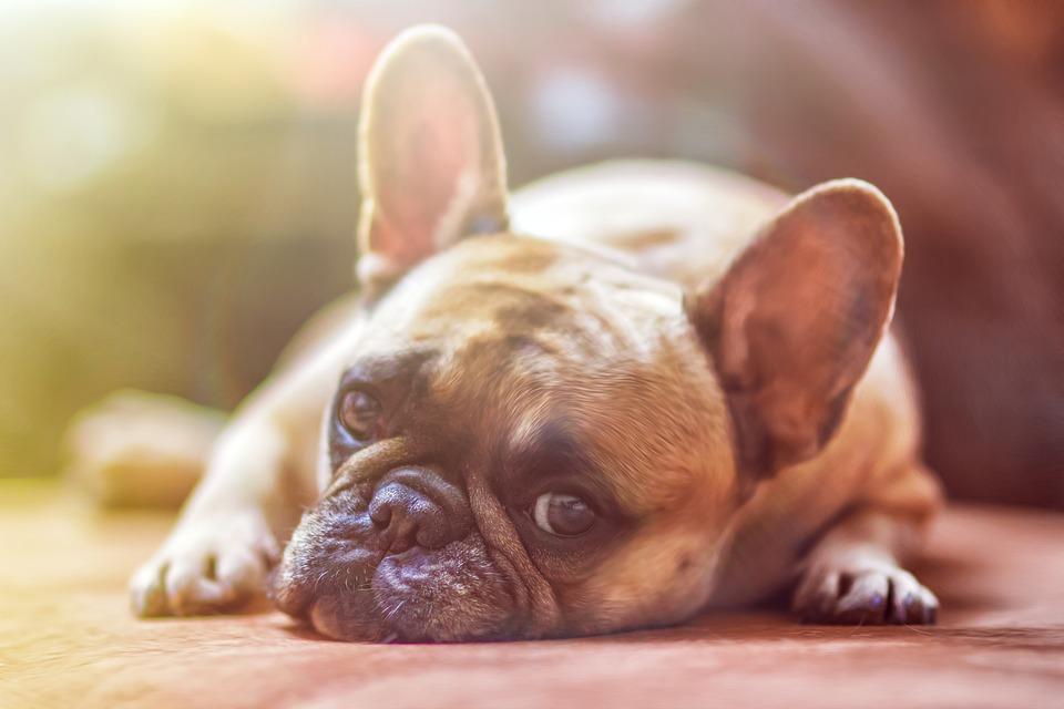 Goyo Jiménez asegura que los perros también se ríen