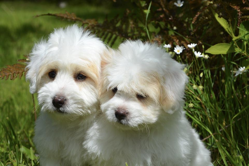 Los números de perros registrados aumentan en España