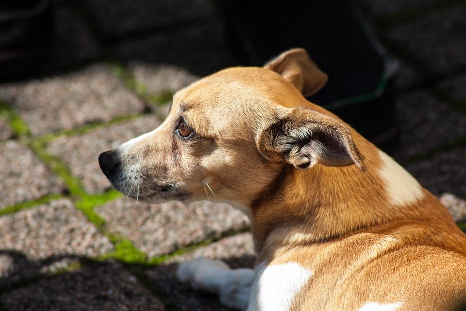 Nace el primer centro de recuperación para perros
