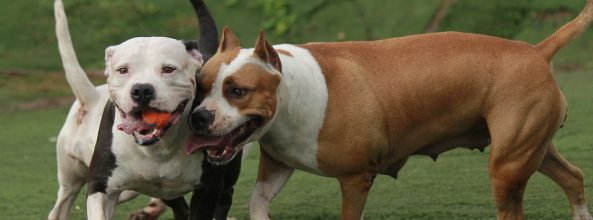 ¿Por qué los perros son más sociables que los gatos?