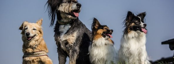 ¿Te cambia la vida adoptar a un cachorro?