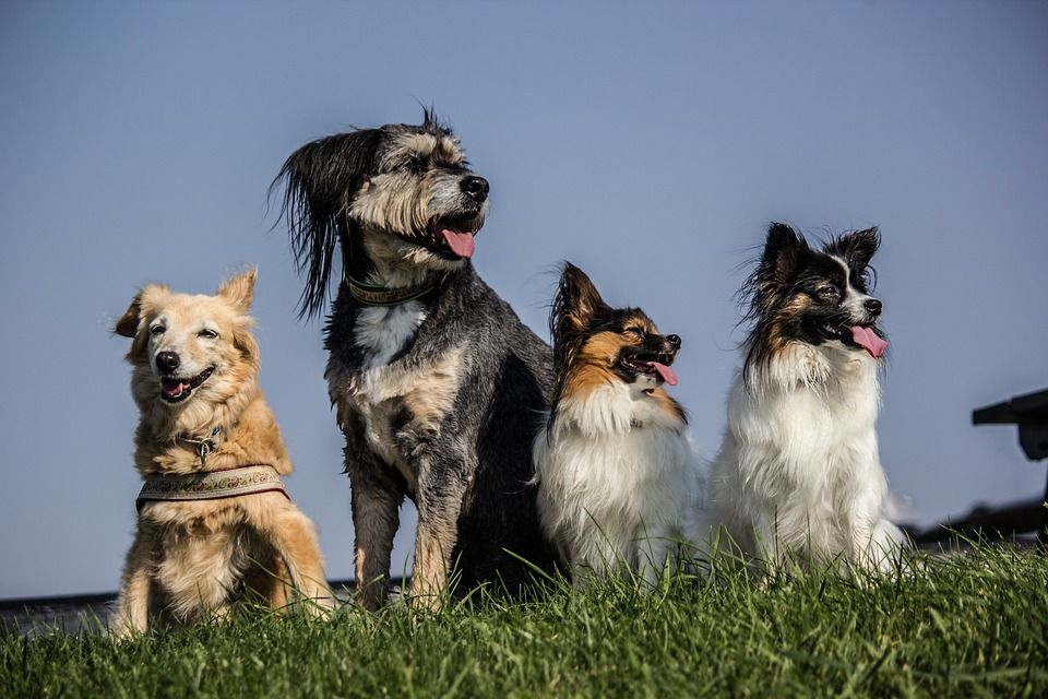 Te cambia la vida adoptar a un cachorro