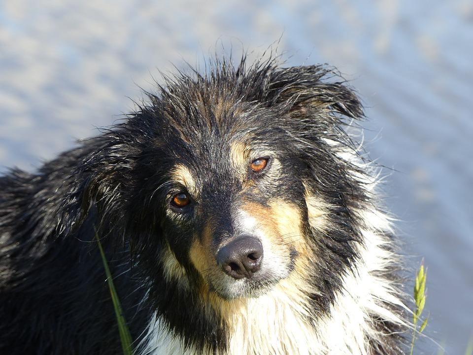 ¿Qué quiere decir un perro que mira fijamente?
