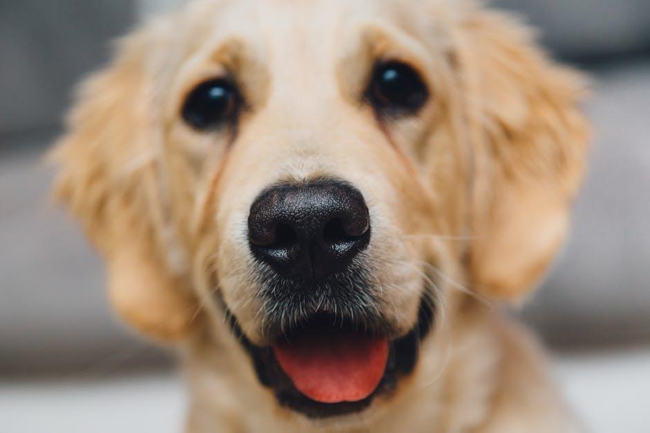 Blat el perro que reconoce el cancer de pulmon