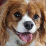 Cómo evitar el mal aliento en los perros