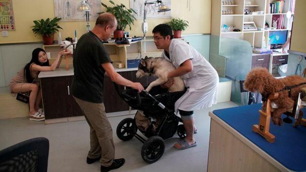 Nuevas terapias sanación perros con acupuntura