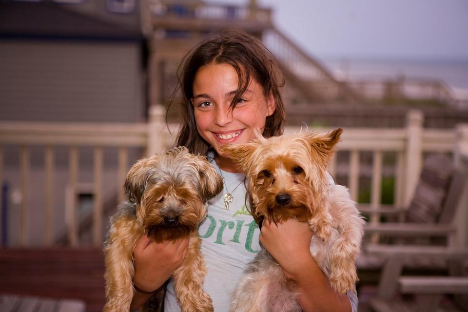 ¿Se reencarnan los perros?