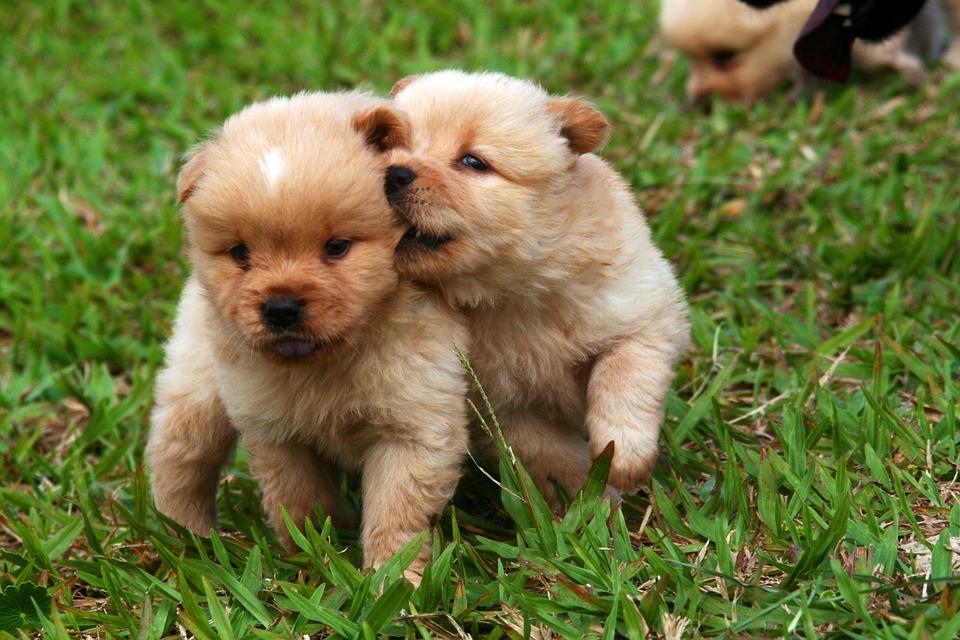 Descubren las razas de perros más amigables