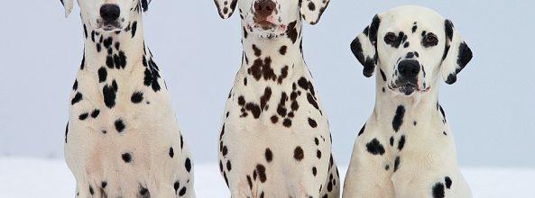 Descubre qué piensan los perros de sus dueños