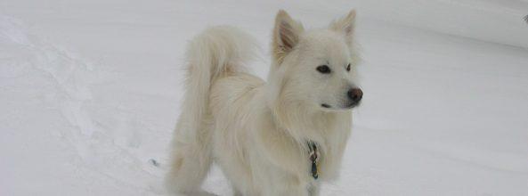 Razas de perros pequeños: Tipos y características