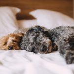 ¿Es bueno que los perros duerman con los dueños en cama?