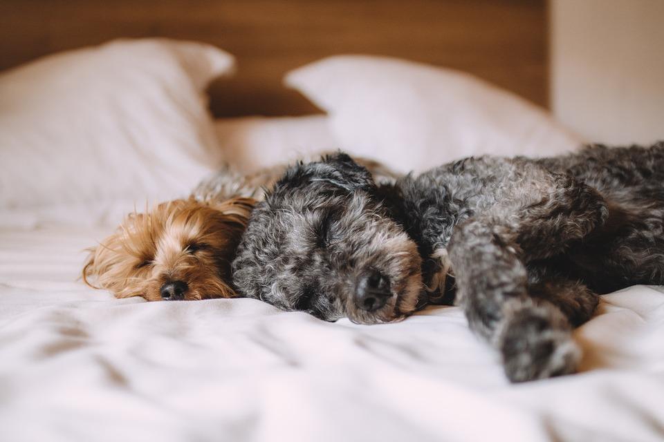 Es bueno que los perros duerman con los dueños en cama