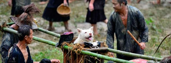 Los perros son como Dioses en Guizhou