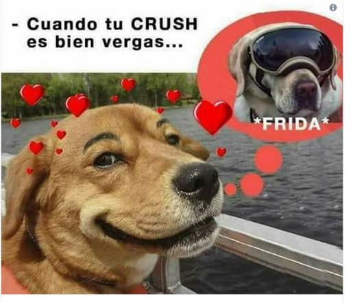 Memes de Frida que están triunfando