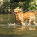 Perros protegen a especies protegidas