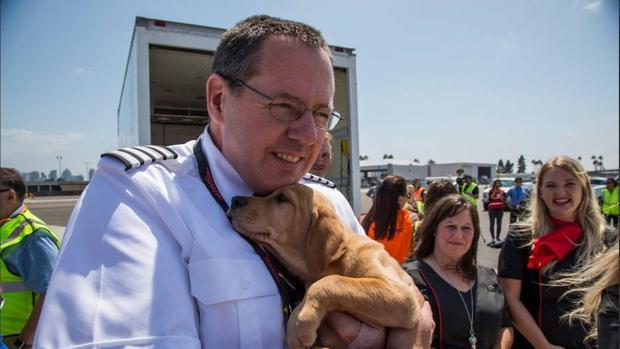 Rescatan a perros sin hogar del temporal