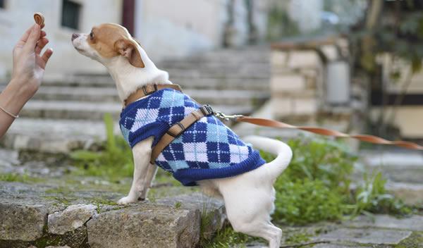 Ropa para perros económica, ¿Dónde puedo comprarla?