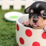 Accesorios y artículos para perros pequeños