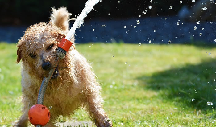 Cuidados y adiestramientos de las razas de perros pequeños