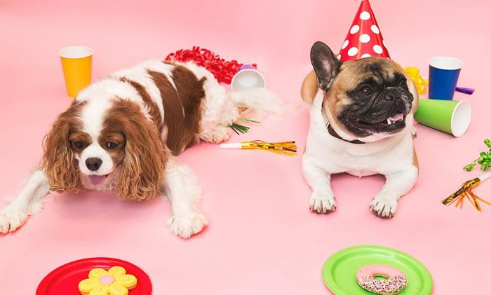 Alimentación de las razas de perros pequeños