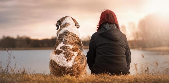 Perros en adopción: Cómo y dónde adoptar