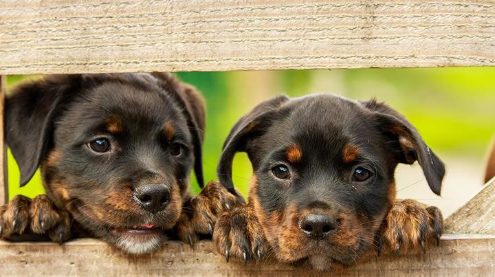 ¿Qué perro adoptar?