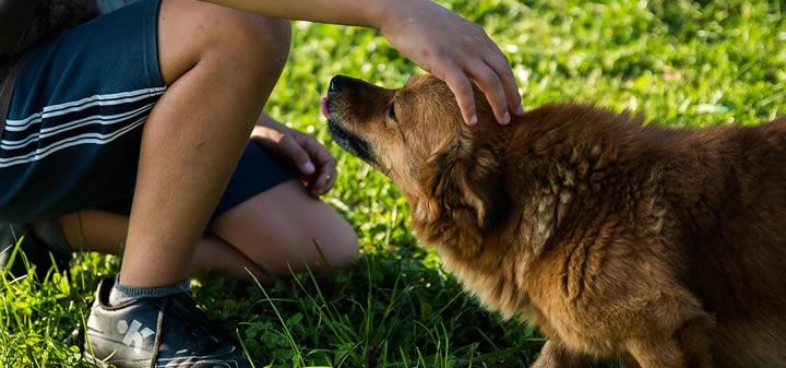 ¿Qué implica la adopción de perros?