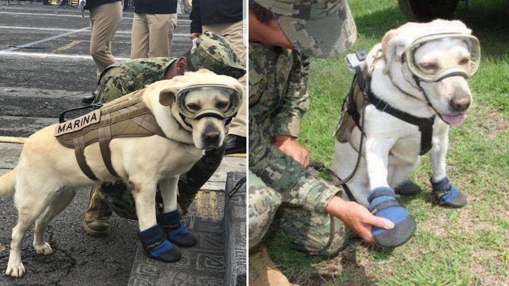 México pide donar botas para perros de rescate