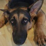 ¿Cómo tratar el miedo a los ruidos en los perros?