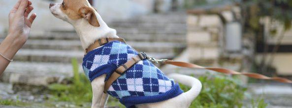 Ropa barata para perros, la última moda low cost