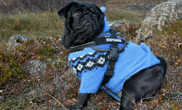 La ropa para perros, una moda que ¡enamora!