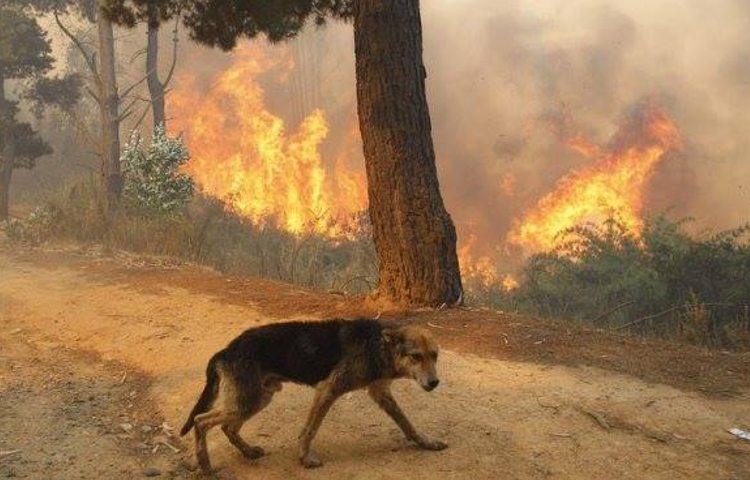 Última hora del estado perros y animales tras incendios Galicia