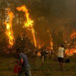 ¿Cómo ayudar a perros perdidos en incendios Galicia y Asturias?