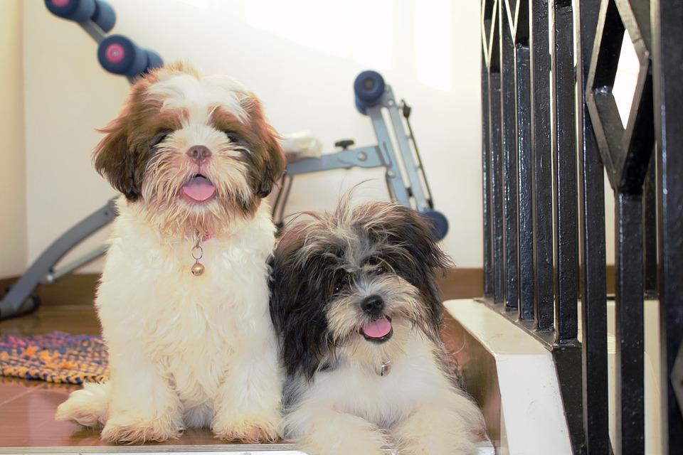 Back´N´Borrow para hacer amigos que tienen perros