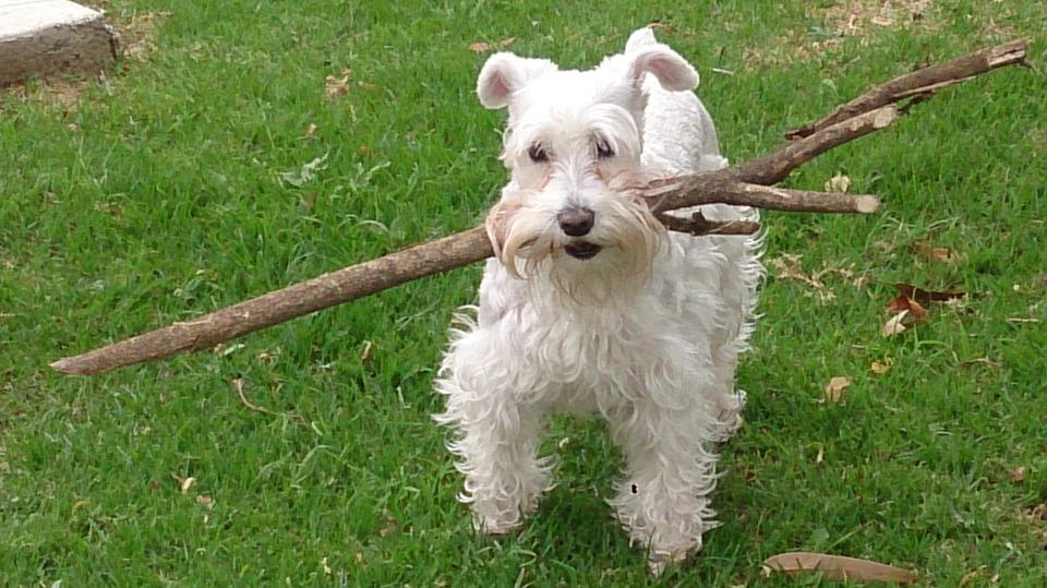 S.O.S. Mi perro se ha perdido