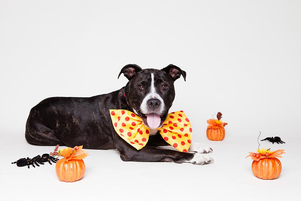 PETA avisa que los perros y gatos deben pasar el Halloween en casa