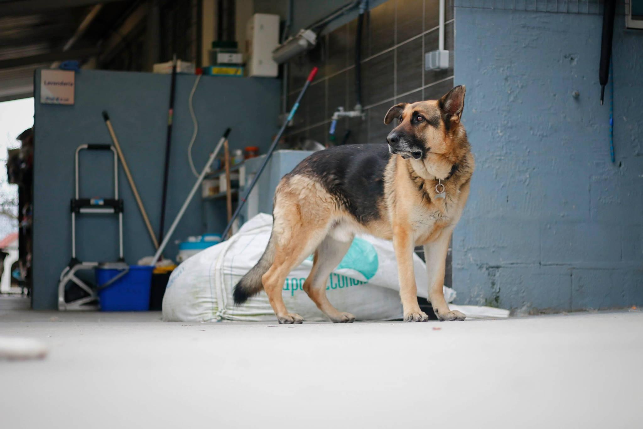 """Salva 18 perros ayudando a """"Os Palleiros"""""""