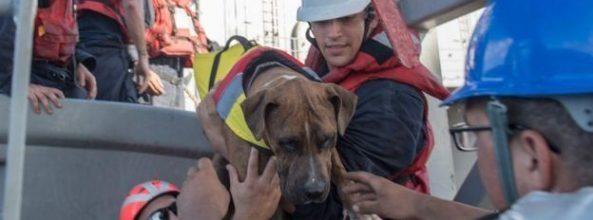 Salvan a 2 mujeres y 2 perros en alta mar después de 5 meses
