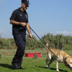 """""""Adopta un Jubilado"""" para acoger a perros ex policías"""