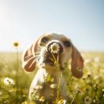 Fotos ganadoras del Concurso Mundial de Perros