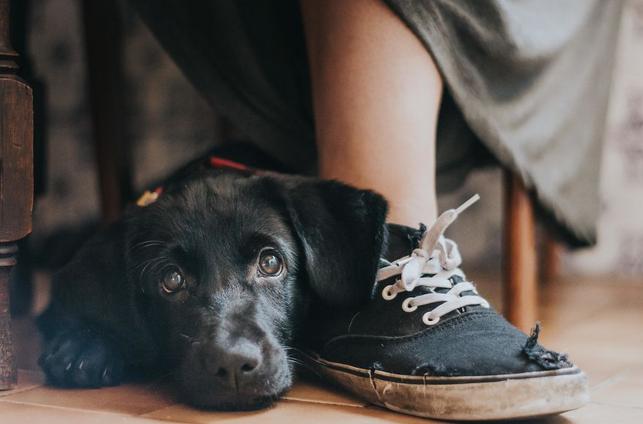 Foto de un perrito tumbado al lado de su dueña