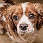 La Protectora A Madroa tiene casi 700 perros ¡adopta!