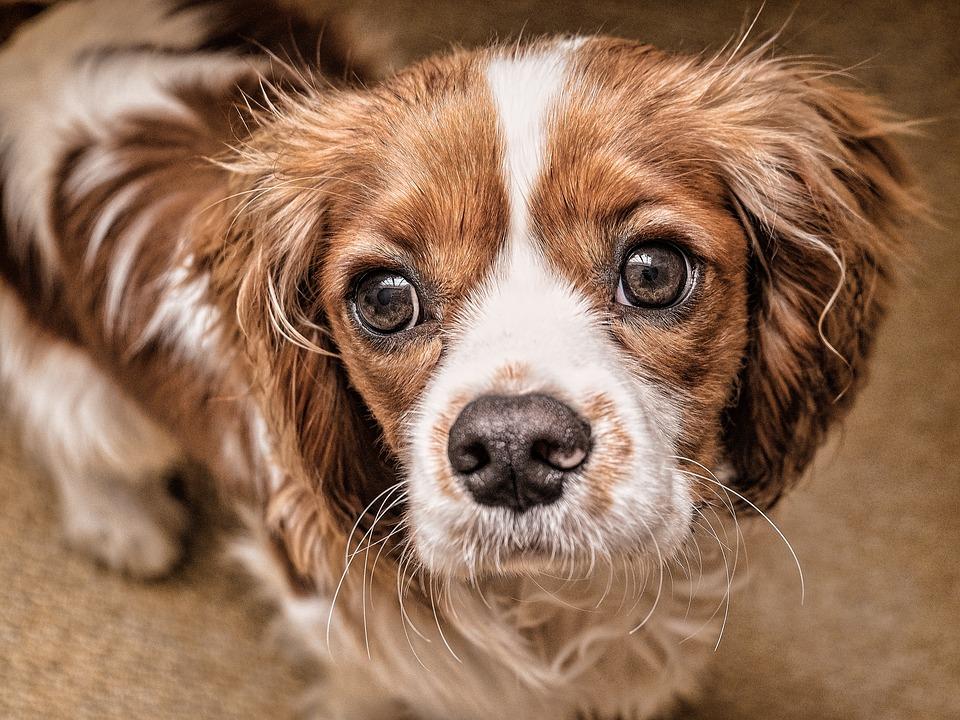 La Protectora A Madroa tiene 700 perros ¡adopta!