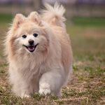 Los perros aman que sus dueños se sientan felices