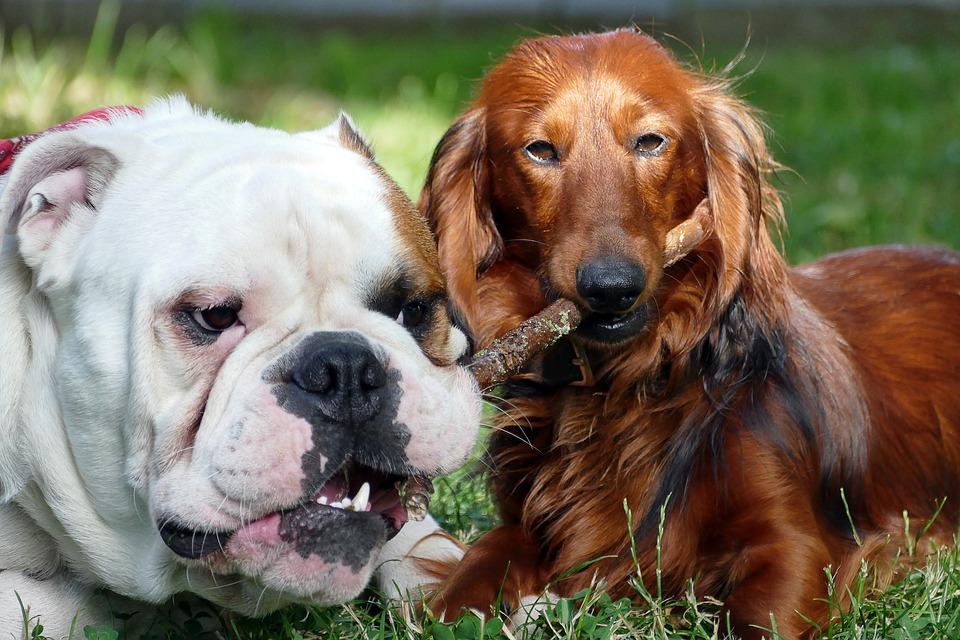 Mitos acerca de los perros