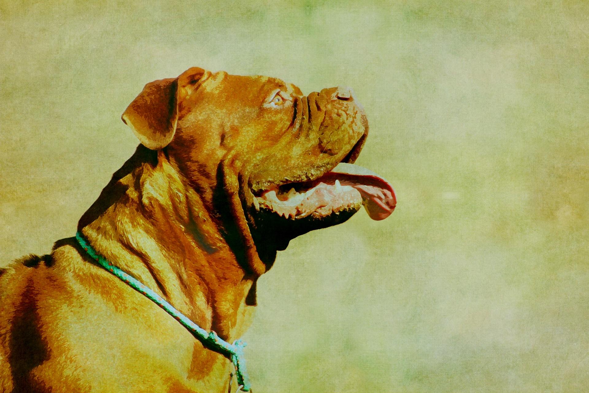 Polémica por ataques de perros PPP