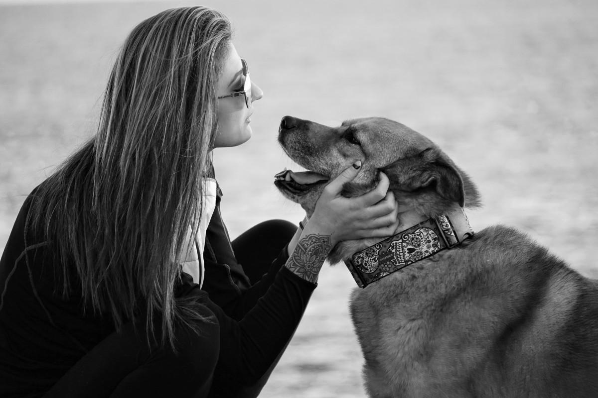 Los perros alargan la vida de las personas